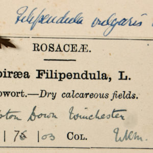 Herbarium label from Keble Martin's herbarium