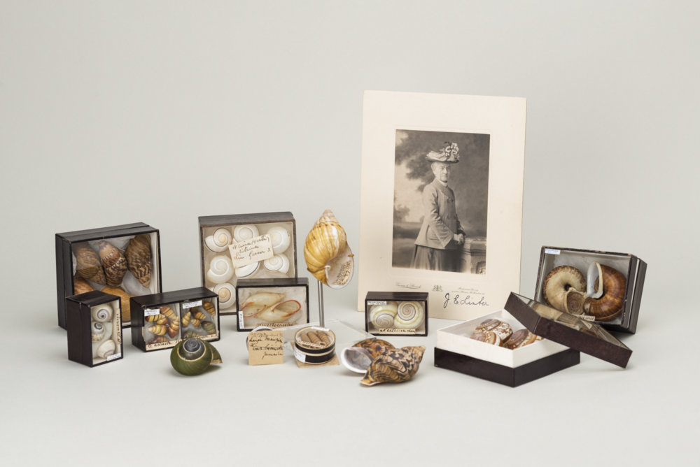 Photo of Miss Linter and some of the land snail specimens she gave to RAMM