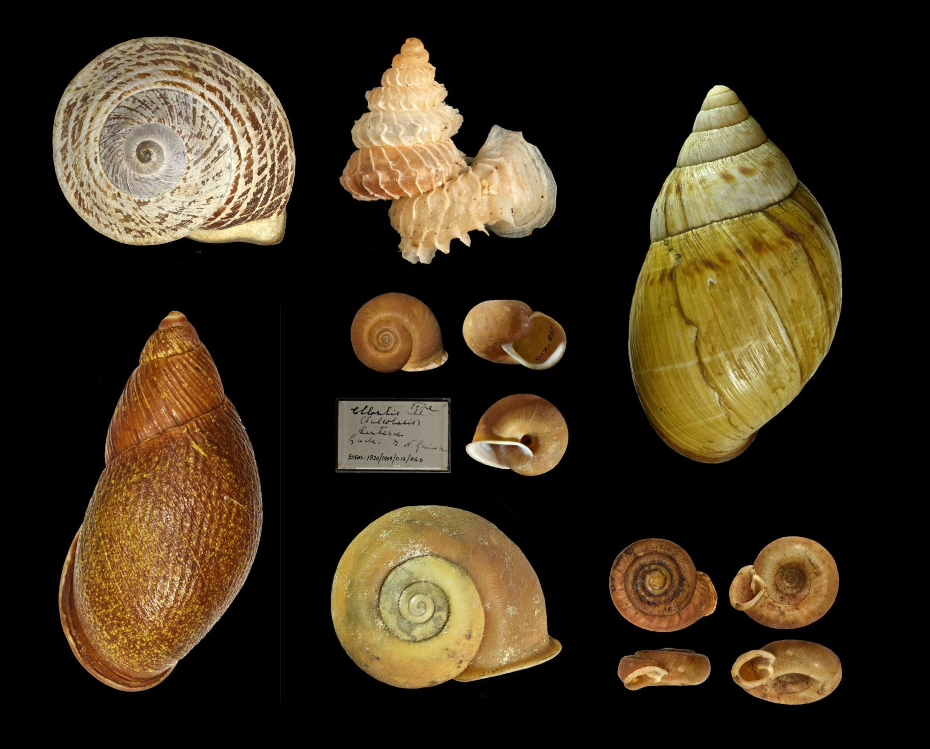 Some specimens named after Miss Linter
