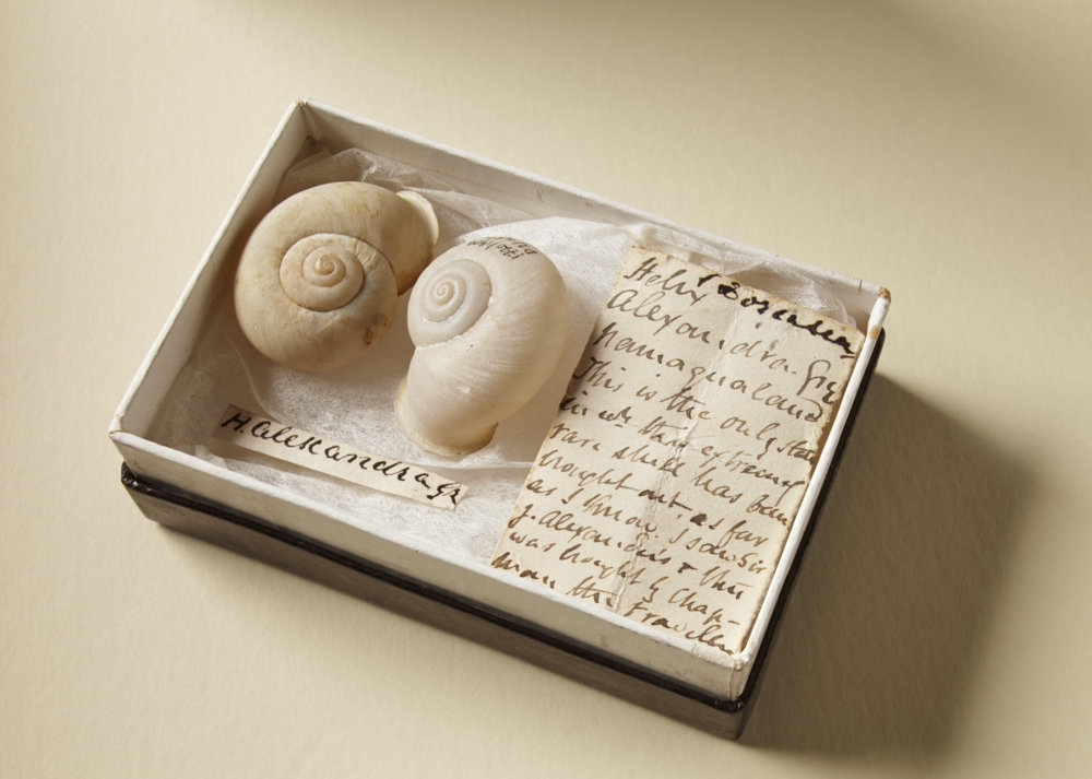 Two of the 15,000 shells in the collection, boxed with a label